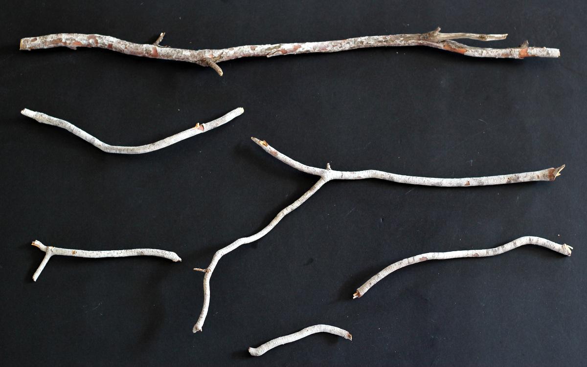 שימוש מקורי בענפים