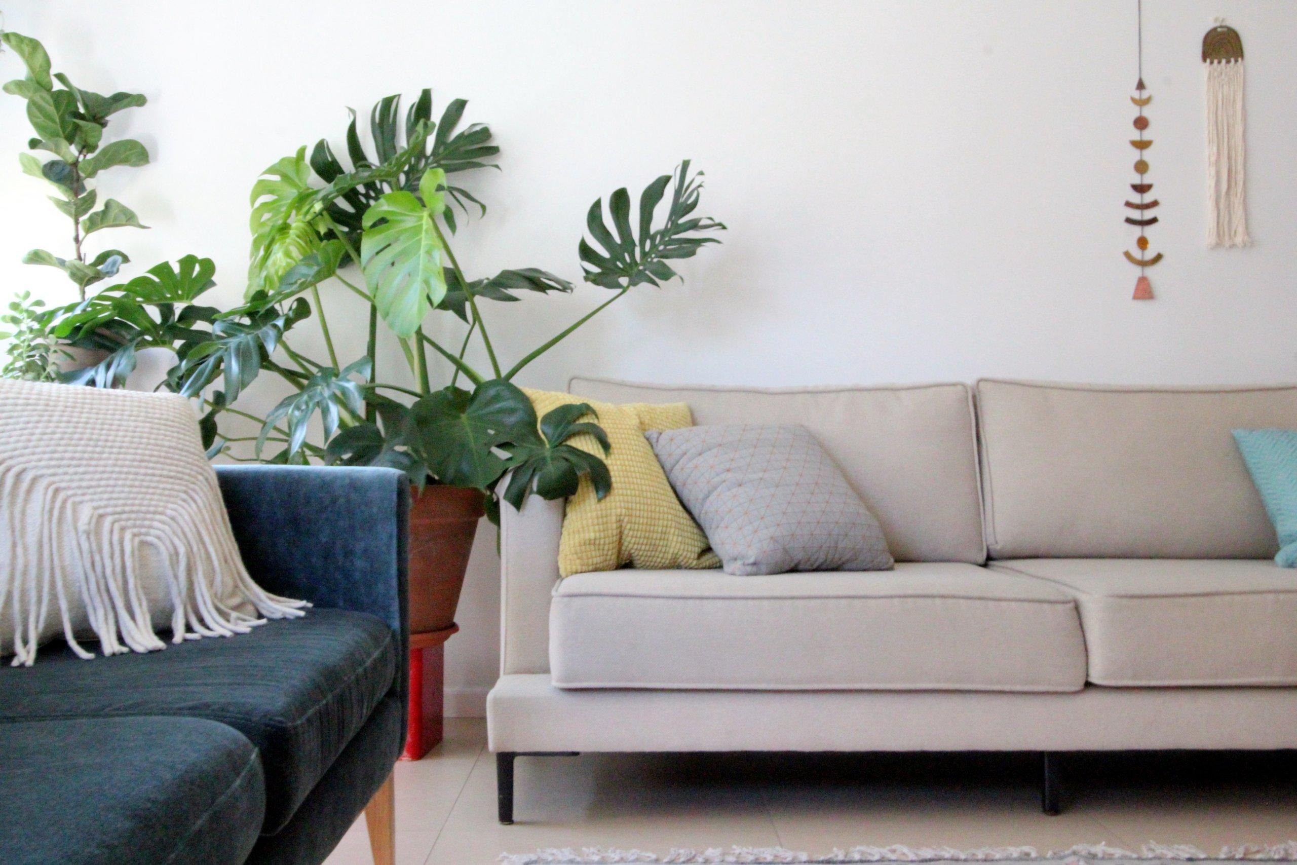 הום סטיילינג עם צמחים