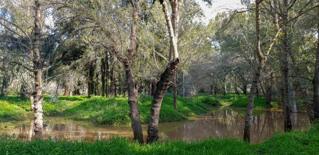 יער אילנות, בריכת חורף