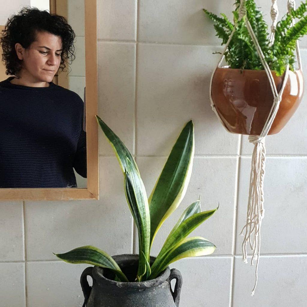 סנסיווריה, לשון החותנת, צמחים לחדר שרותים, צמחי בית, טיפים למניעת עובש באמבטיה