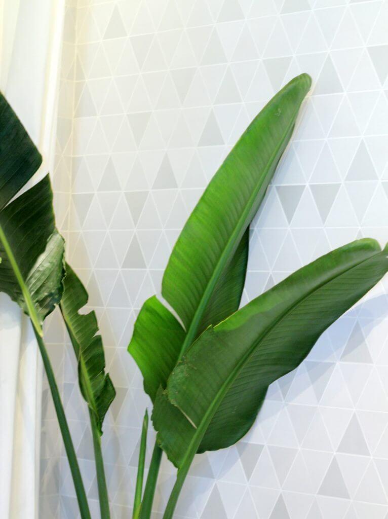 ציפור גן עדן ניקולאי צמחים למקלחת